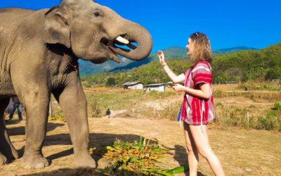 Jak si z Thajska odvézt etický sloní zážitek