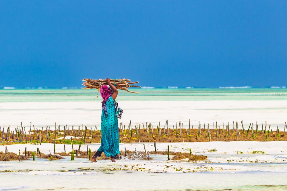 Zanzibar – země pláží a plantáží