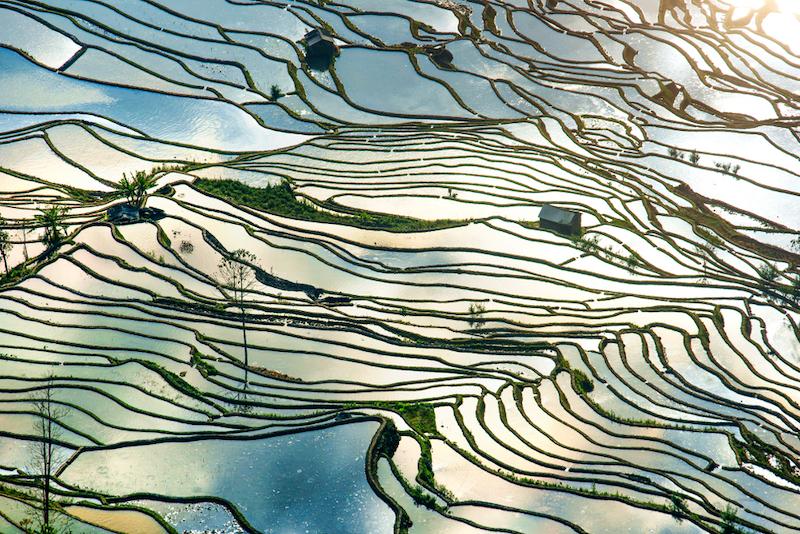 Rýžová pole Yuanyang