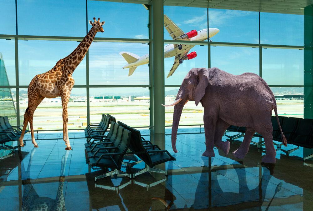 Letiště San Francisco – místo kde naleznete klid