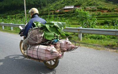 Věci, které vás překvapí při první cestě do Asie