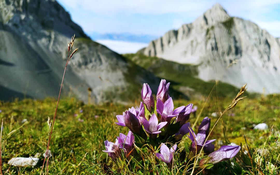 Cestování do Rakouska v souvislosti s covid-19