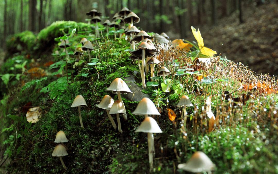 Jsou houby magické?