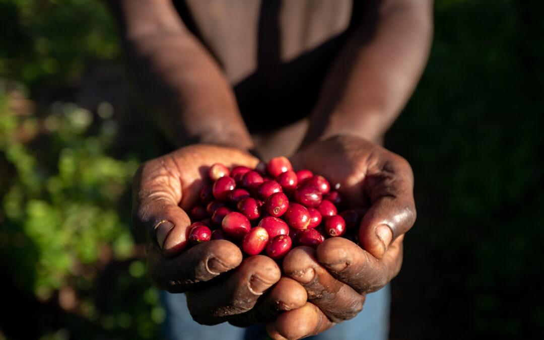 Pěstování v Demokratické Republice Kongo