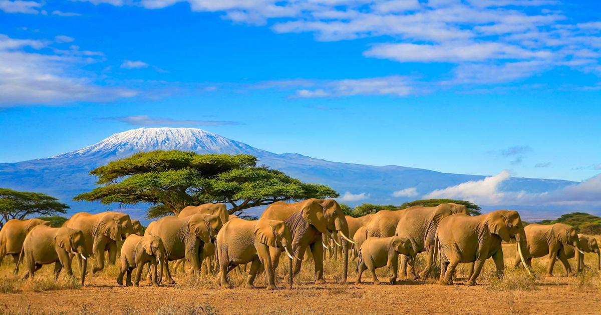 Tanzánie, základní Afrika